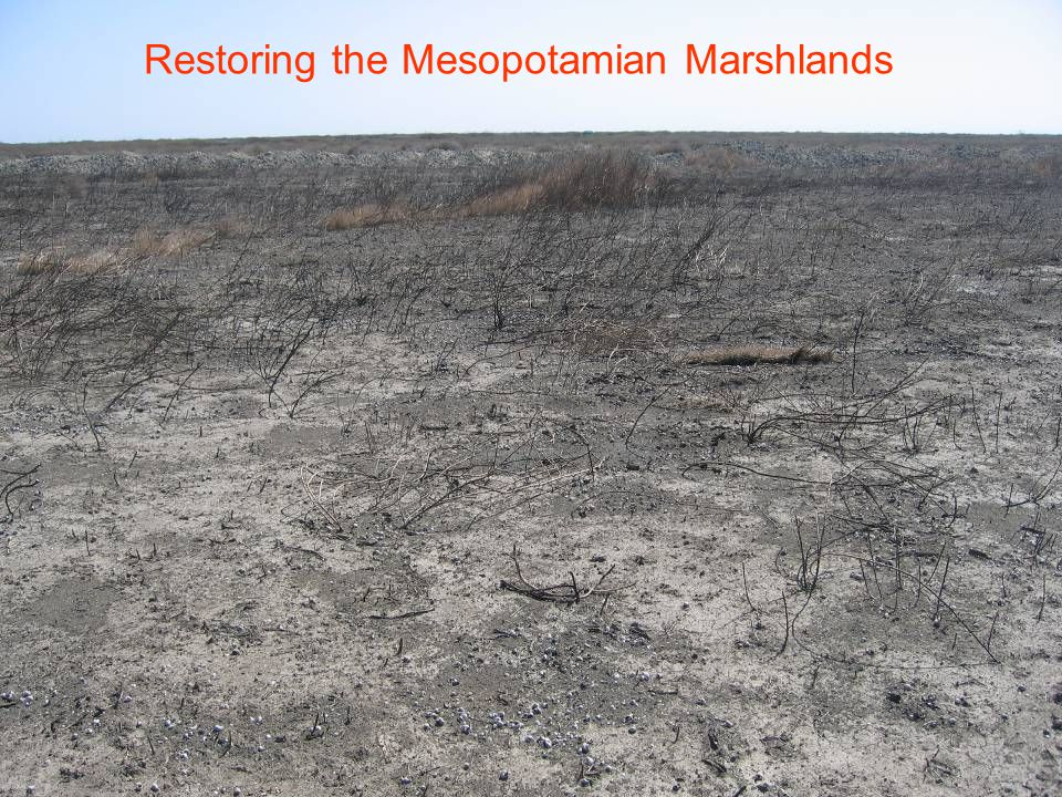 Restoring the Mesopotamian Marshlands