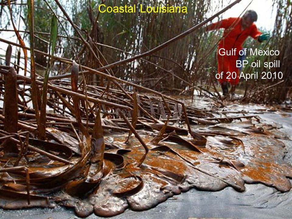 Gulf of Mexico BP oil spill of 20 April 2010 Coastal Louisiana