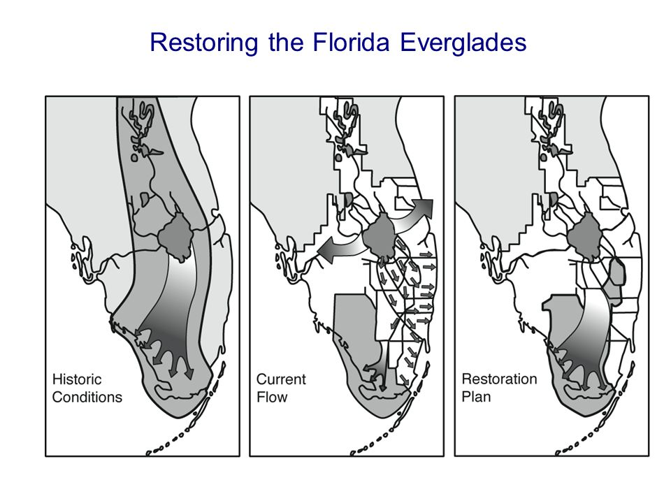 Restoring the Florida Everglades