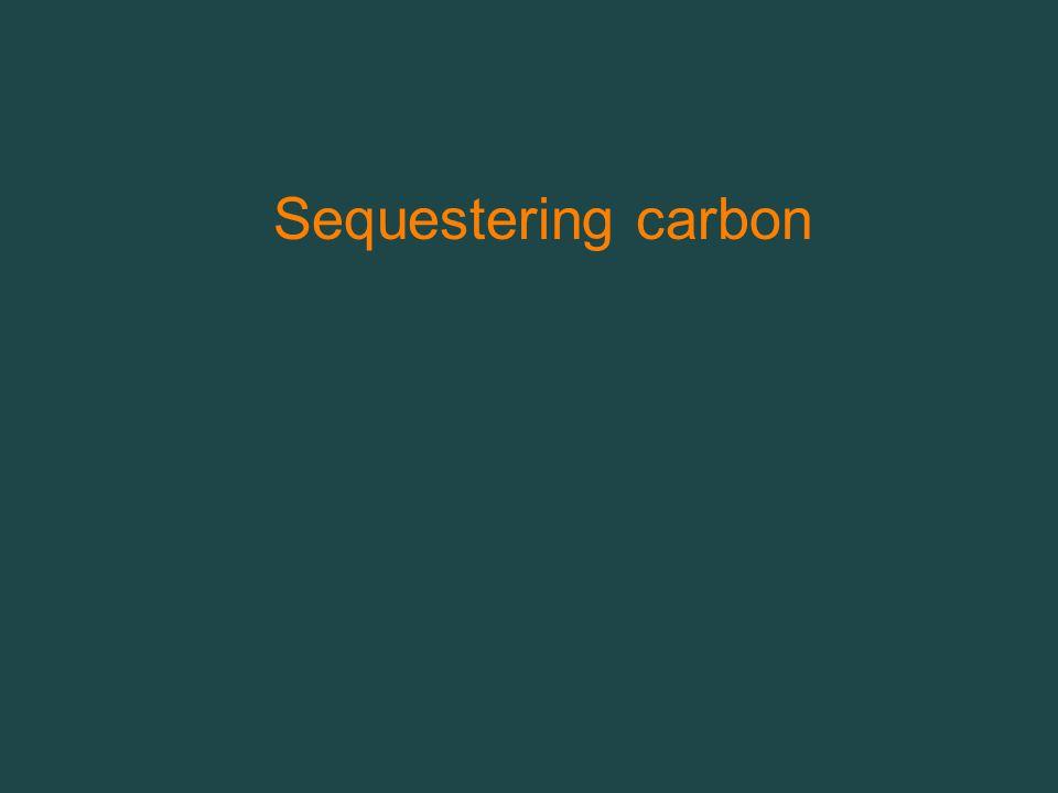 Sequestering carbon