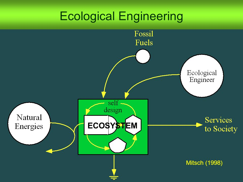 Ecological Engineering ECOSYSTEM