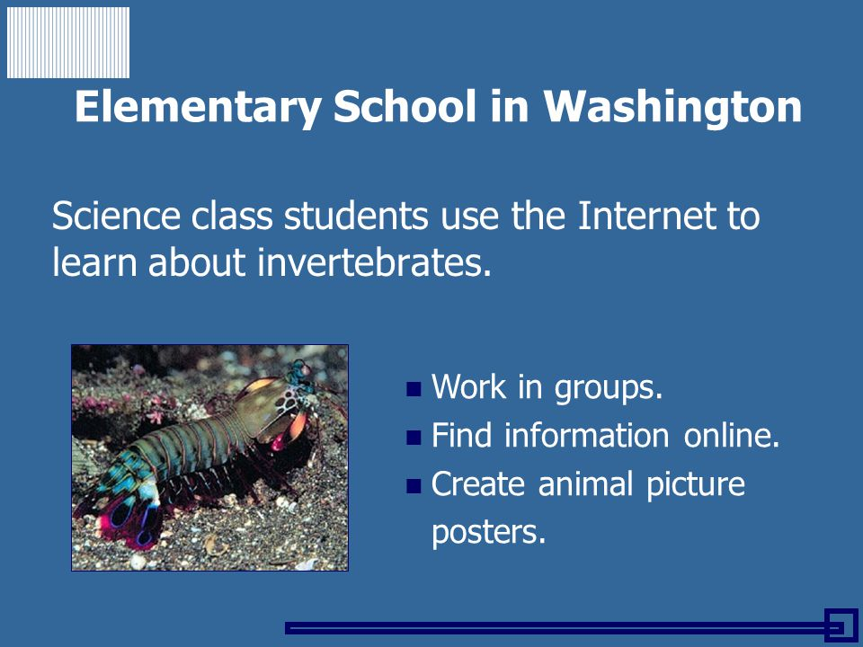 Elementary School in Washington Science class students use the Internet to learn about invertebrates. Work in groups. Find information online. Create