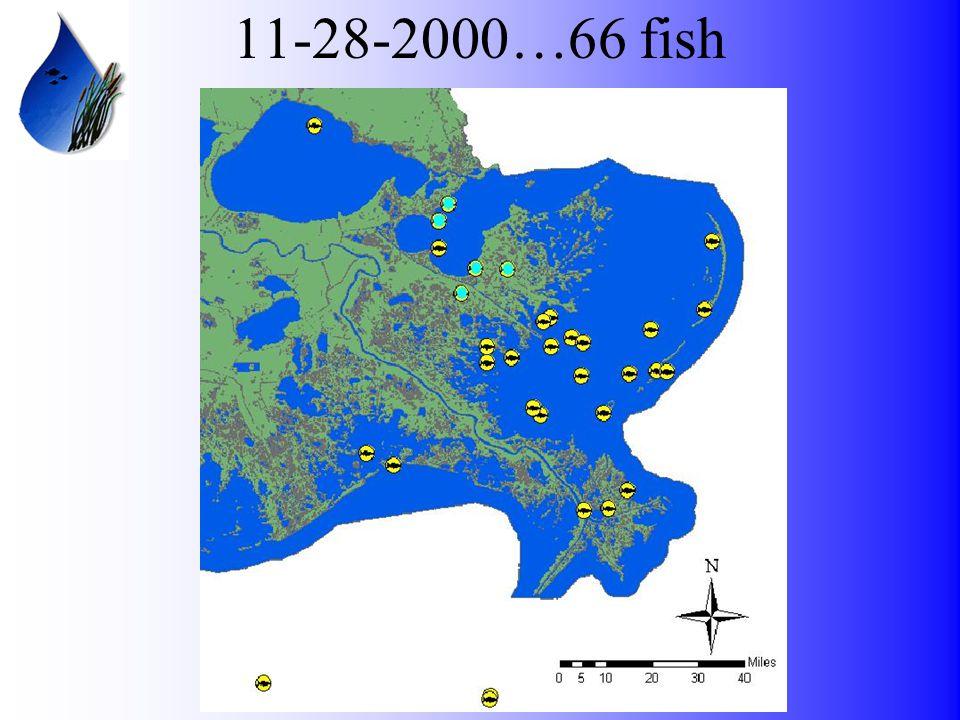 11-28-2000…66 fish