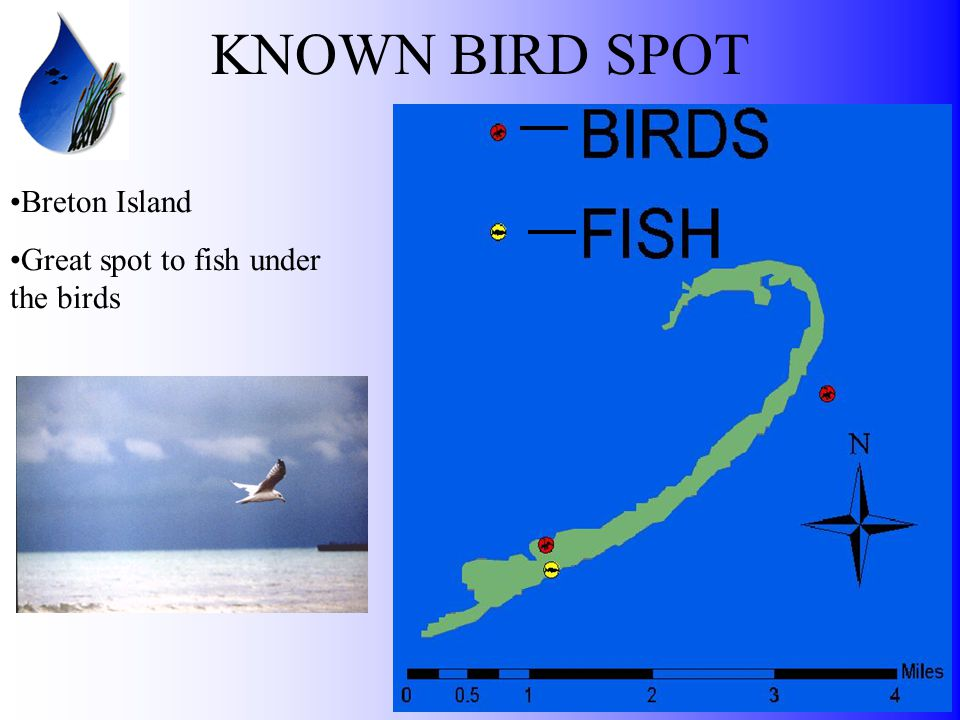 KNOWN BIRD SPOT Breton Island Great spot to fish under the birds