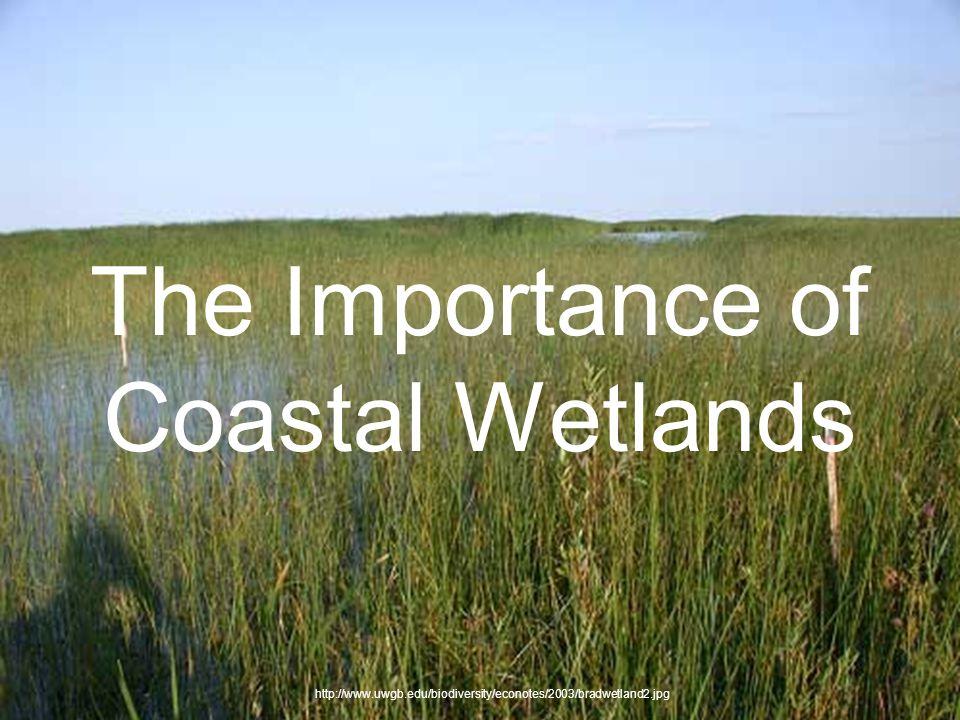 The Importance of Coastal Wetlands http://www.uwgb.edu/biodiversity/econotes/2003/bradwetland2.jpg