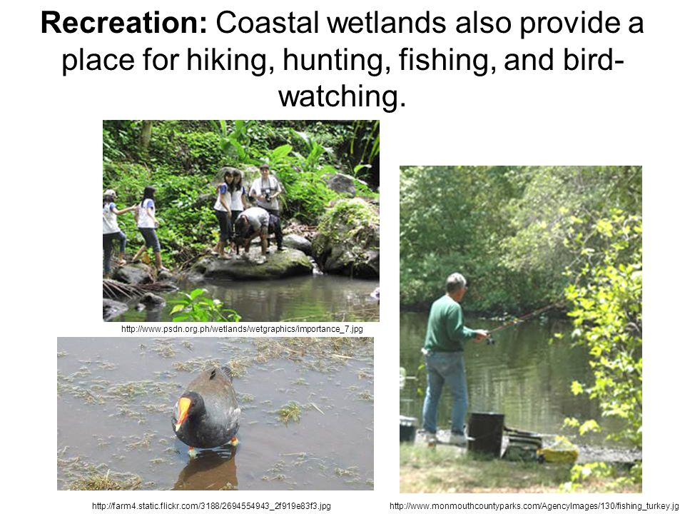 Recreation: Coastal wetlands also provide a place for hiking, hunting, fishing, and bird- watching. http://www.psdn.org.ph/wetlands/wetgraphics/import