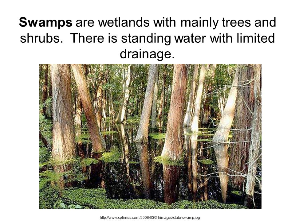 Swamps are wetlands with mainly trees and shrubs. There is standing water with limited drainage. http://www.sptimes.com/2006/03/31/images/state-swamp.