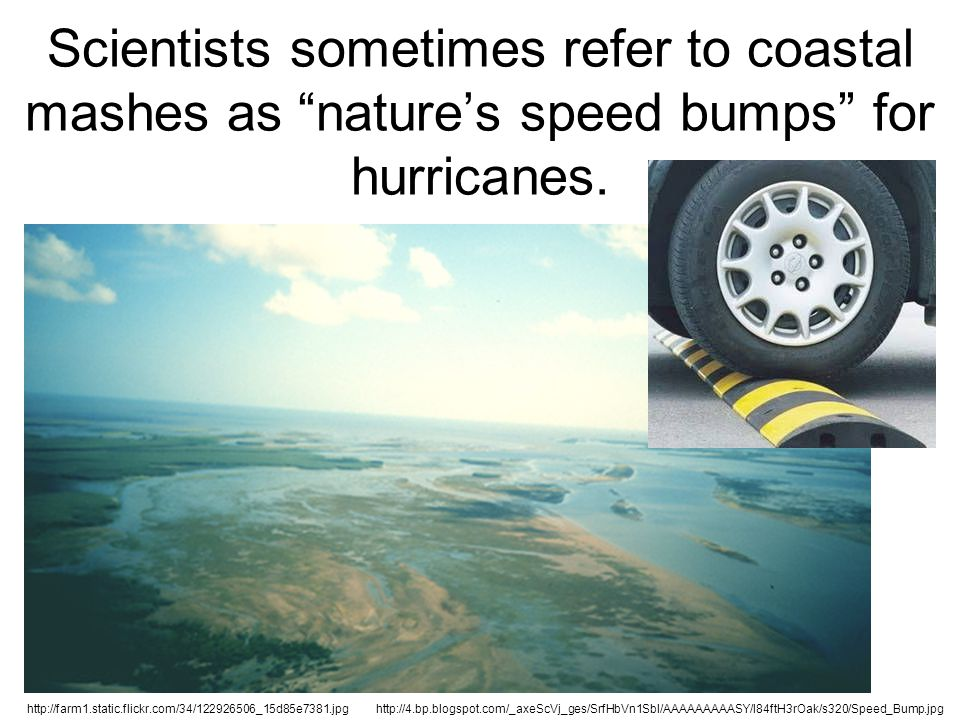 "Scientists sometimes refer to coastal mashes as ""nature's speed bumps"" for hurricanes. http://4.bp.blogspot.com/_axeScVj_ges/SrfHbVn1SbI/AAAAAAAAASY/l"