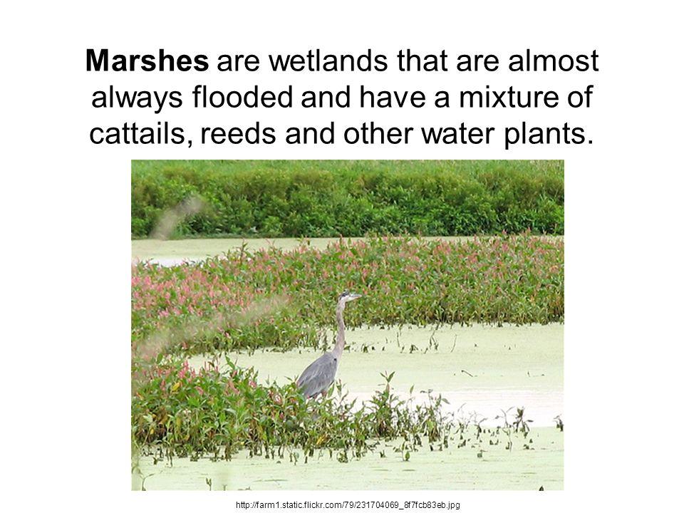 What do coastal wetlands do for us.