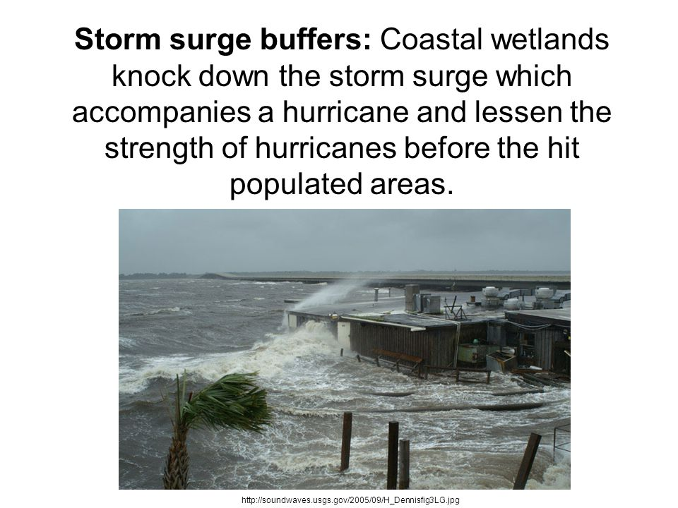Protecting – and rebuilding – coastal wetlands will help us with water quality, erosion control, and protection against hurricanes.