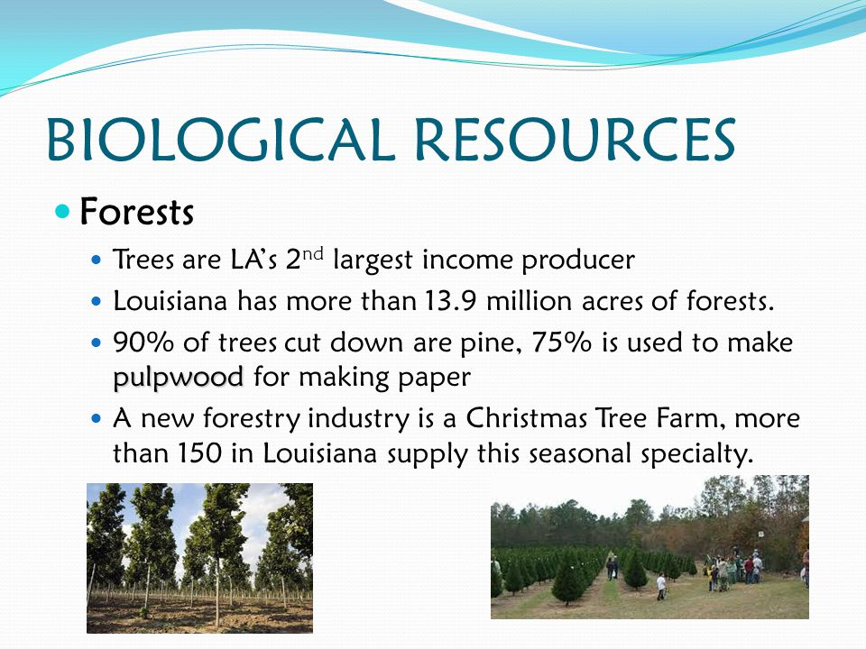 BIOLOGICAL RESOURCES Forests Trees are LA's 2 nd largest income producer Louisiana has more than 13.9 million acres of forests.