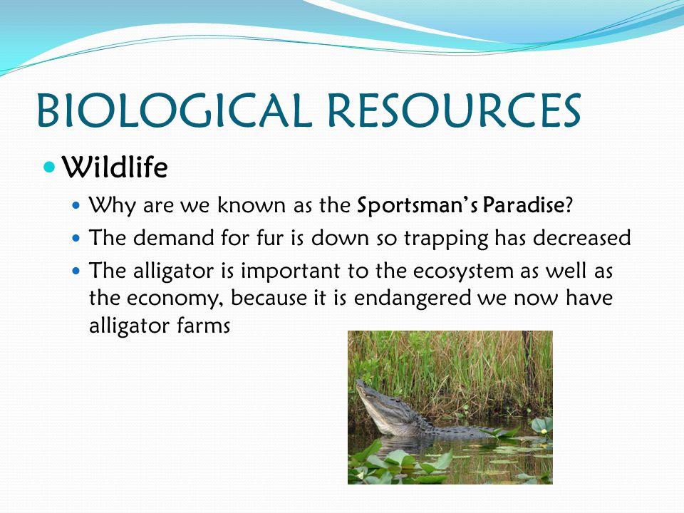 BIOLOGICAL RESOURCES Wildlife Why are we known as the Sportsman's Paradise.