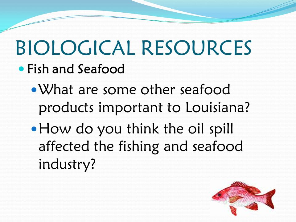 BIOLOGICAL RESOURCES Fish and Seafood What are some other seafood products important to Louisiana.
