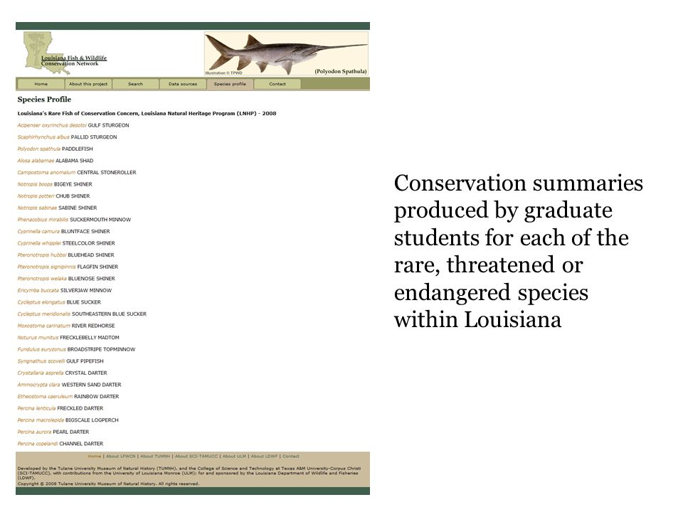 Conservation summaries produced by graduate students for each of the rare, threatened or endangered species within Louisiana