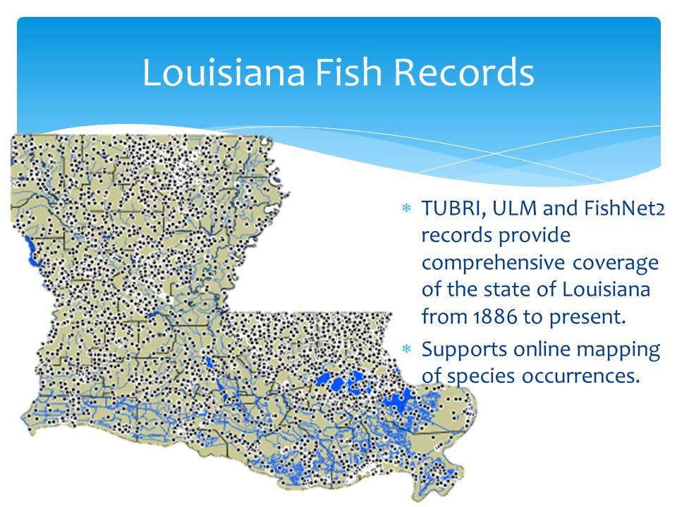 Louisiana Fish Records  TUBRI, ULM and FishNet2 records provide comprehensive coverage of the state of Louisiana from 1886 to present.