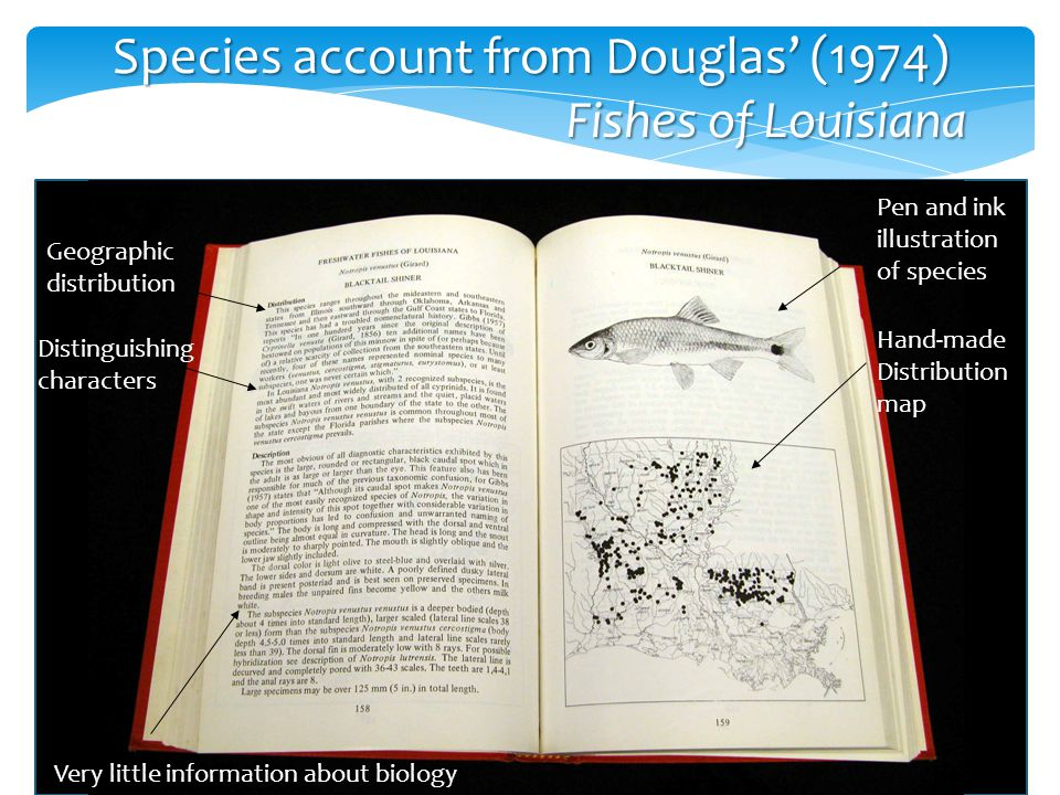 Species account from Douglas' (1974) Fishes of Louisiana Fishes of Louisiana Geographic distribution Distinguishing characters Very little information