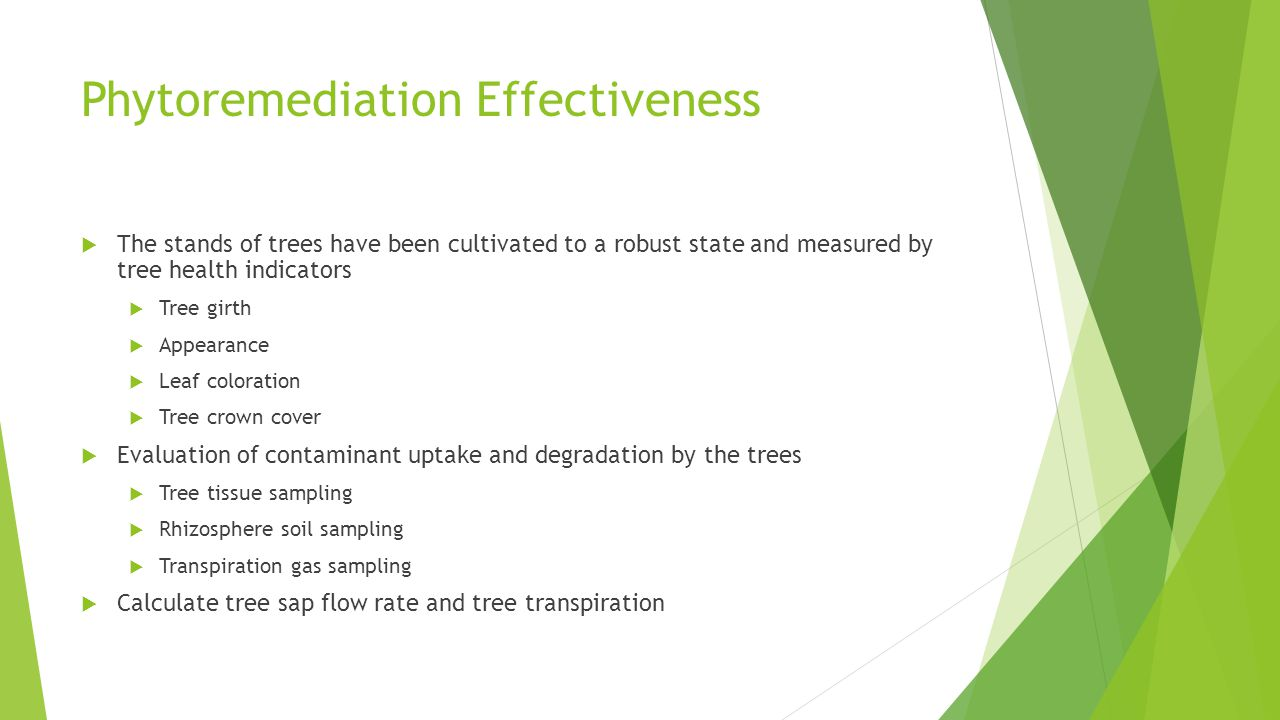 Phytoremediation Effectiveness  The stands of trees have been cultivated to a robust state and measured by tree health indicators  Tree girth  Appe