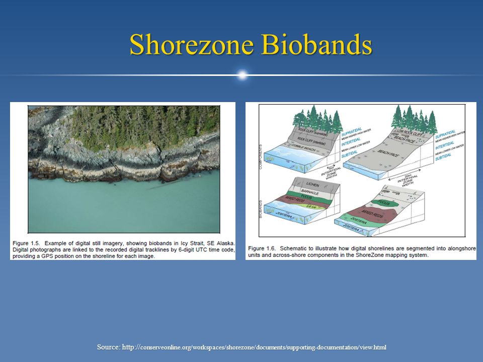 Shorezone Biobands Source: http:// conserveonline.org/workspaces/shorezone/documents/supporting-documentation/view.html