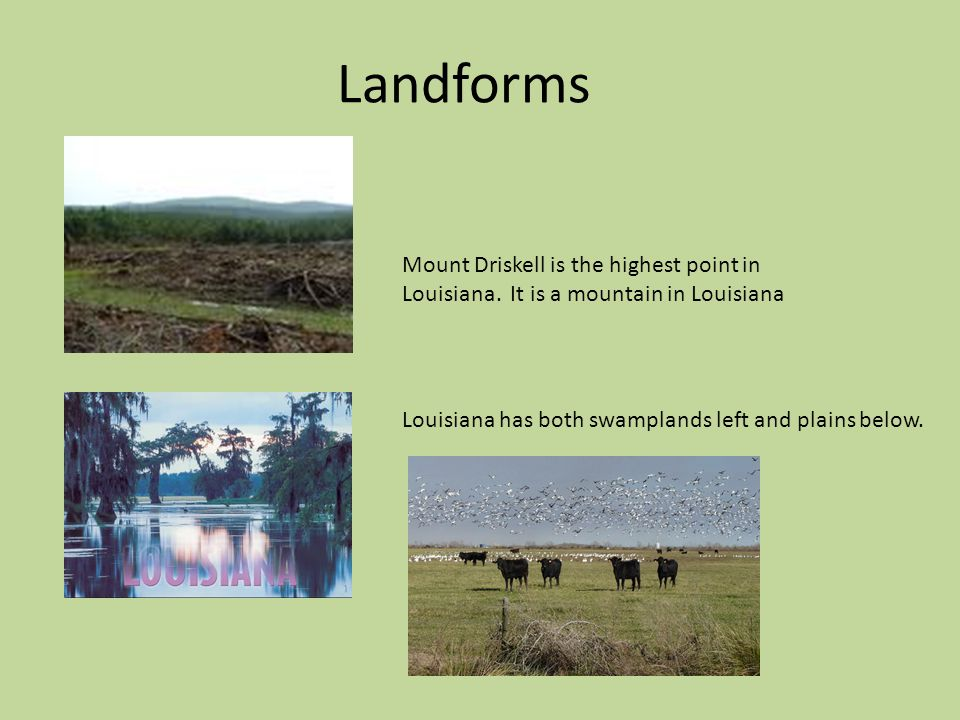 Landforms Mount Driskell is the highest point in Louisiana.