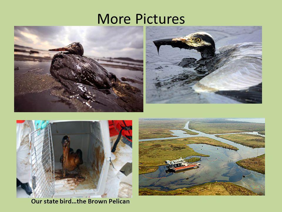 BP Oil Spill Our coastal wetlands Our gulf coast Under the ocean