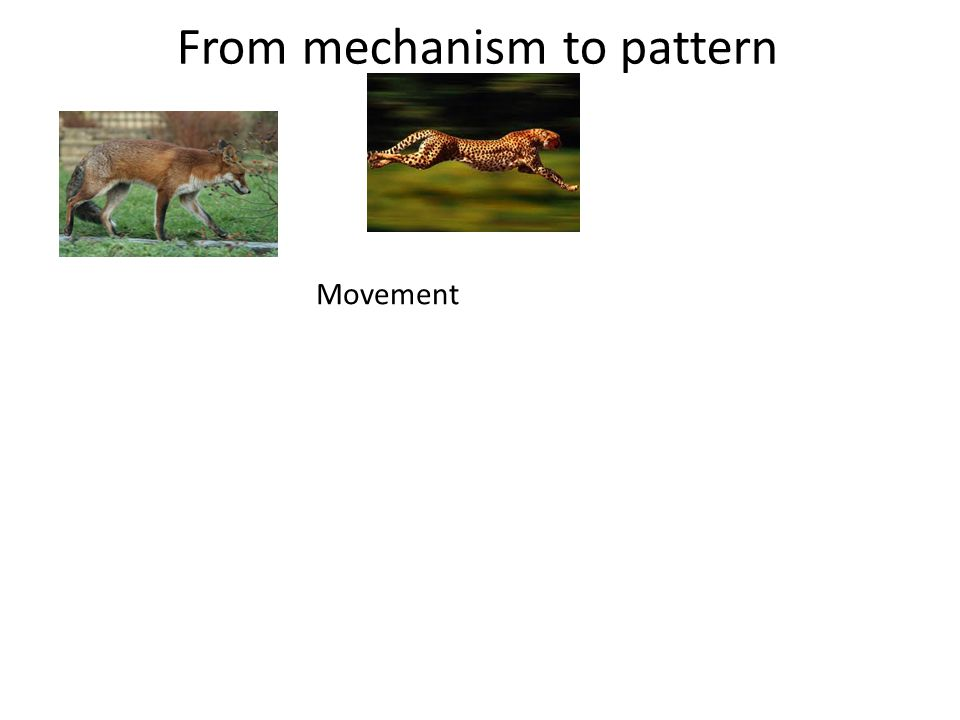 From mechanism to pattern Movement