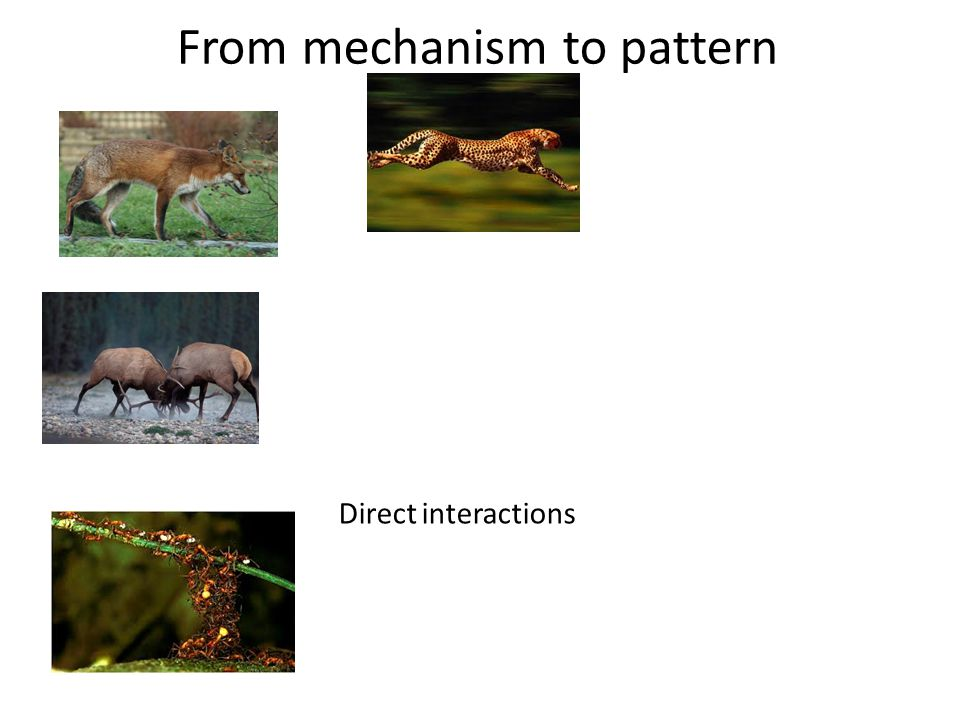 From mechanism to pattern Direct interactions