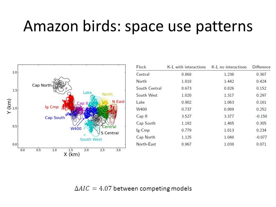 Amazon birds: space use patterns
