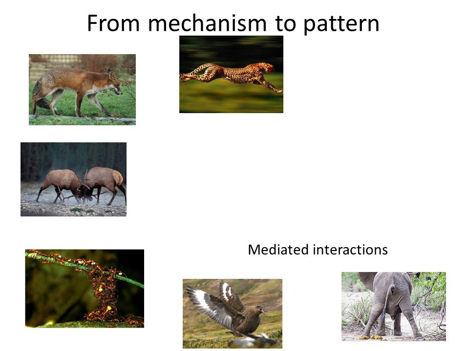 From mechanism to pattern Mediated interactions
