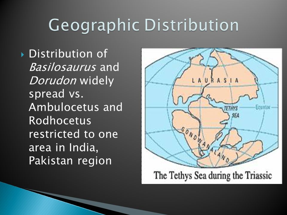  Distribution of Basilosaurus and Dorudon widely spread vs.