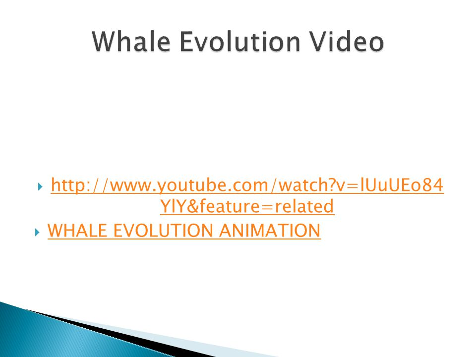  http://www.youtube.com/watch v=lUuUEo84 YlY&feature=related http://www.youtube.com/watch v=lUuUEo84 YlY&feature=related  WHALE EVOLUTION ANIMATION WHALE EVOLUTION ANIMATION