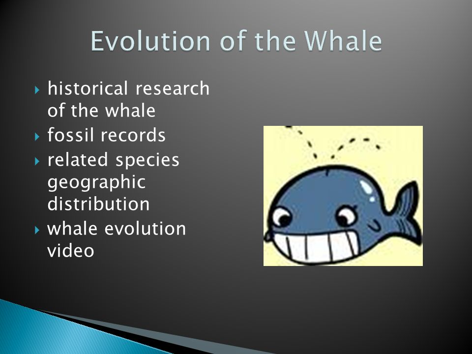  historical research of the whale  fossil records  related species geographic distribution  whale evolution video