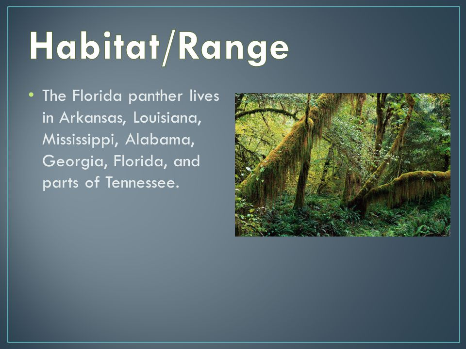 The Florida panther has claws that help it tear meat.
