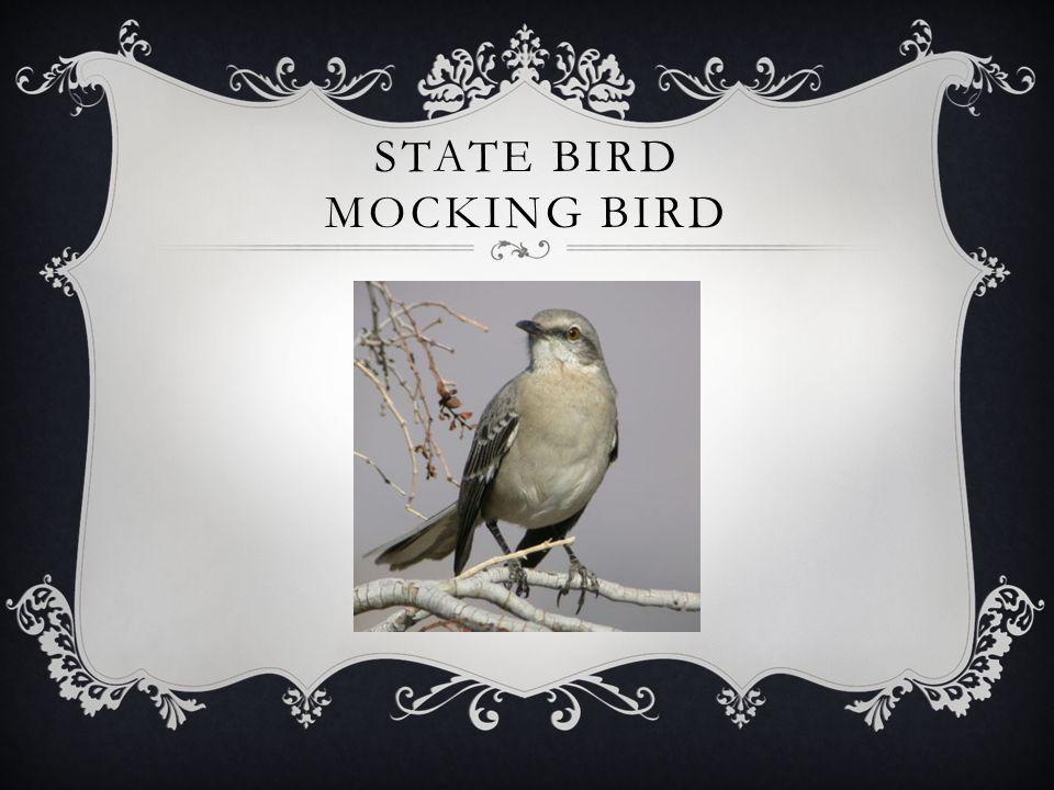 STATE BIRD MOCKING BIRD