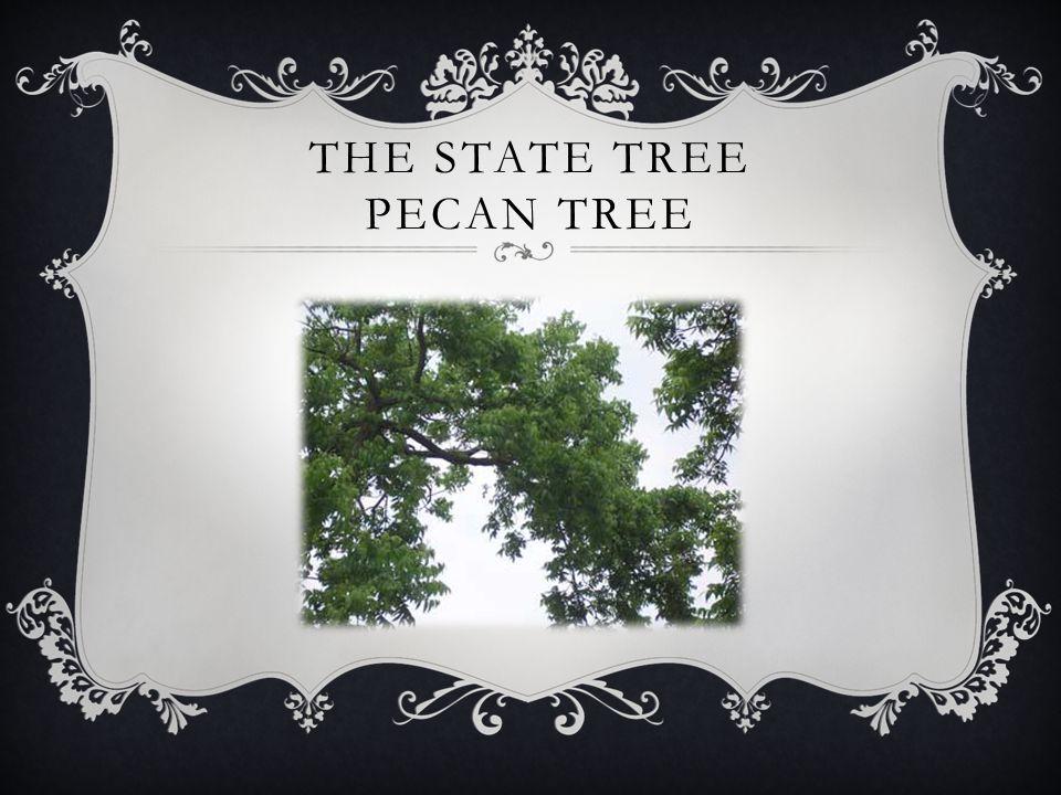 THE STATE TREE PECAN TREE