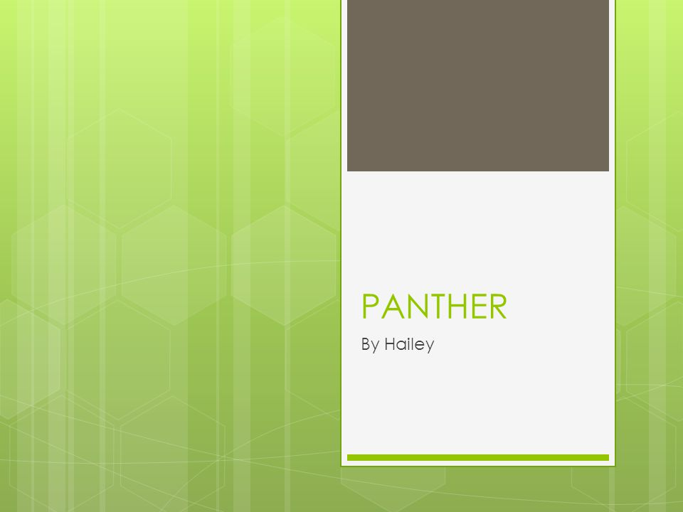 PANTHER By Hailey