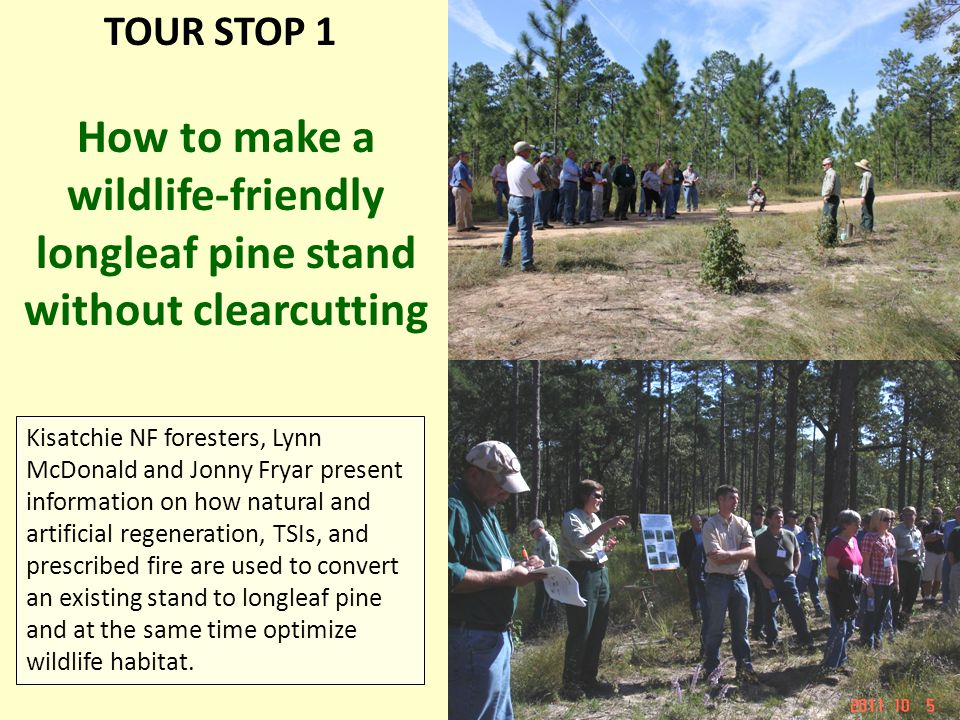 Kisatchie NF foresters, Lynn McDonald and Jonny Fryar present information on how natural and artificial regeneration, TSIs, and prescribed fire are used to convert an existing stand to longleaf pine and at the same time optimize wildlife habitat.