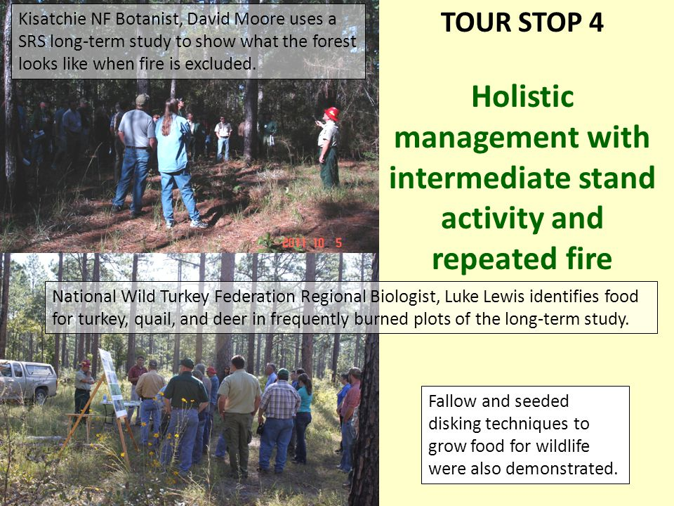 TOUR STOP 4 Holistic management with intermediate stand activity and repeated fire Kisatchie NF Botanist, David Moore uses a SRS long-term study to show what the forest looks like when fire is excluded.