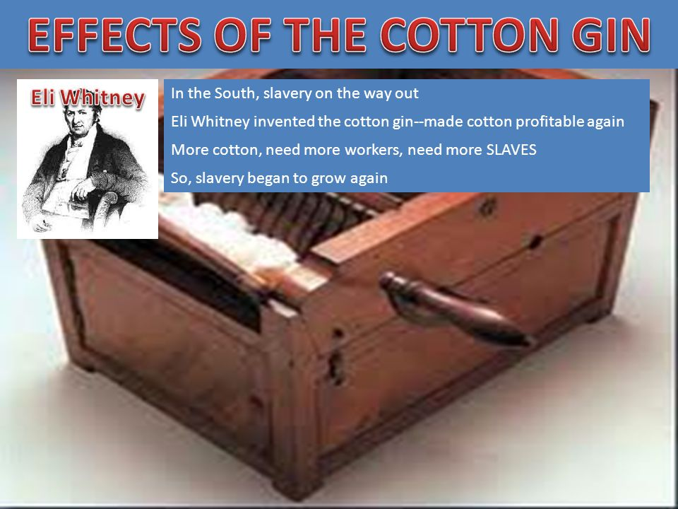 In the South, slavery on the way out Eli Whitney invented the cotton gin--made cotton profitable again More cotton, need more workers, need more SLAVES So, slavery began to grow again