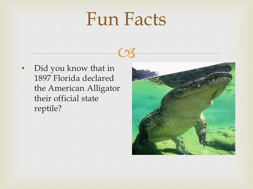  Fun Facts Did you know that in 1897 Florida declared the American Alligator their official state reptile?