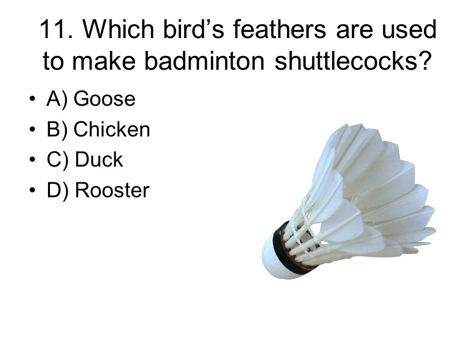 11. Which bird's feathers are used to make badminton shuttlecocks.