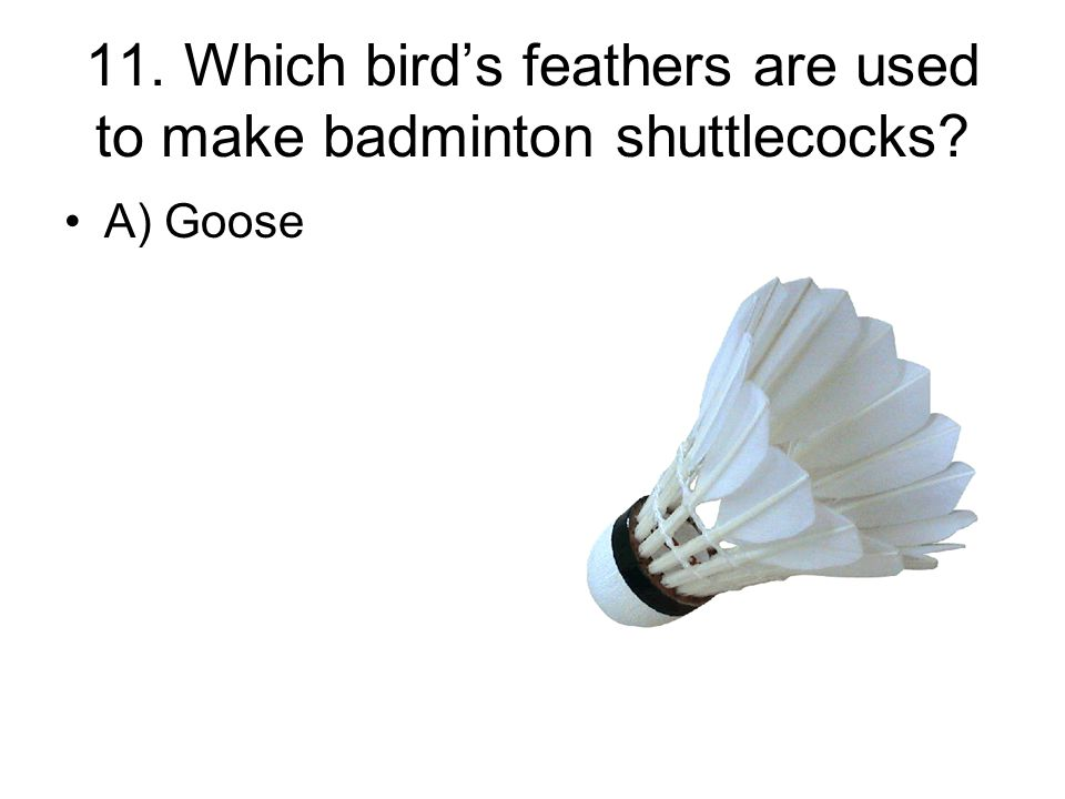 11. Which bird's feathers are used to make badminton shuttlecocks? A) Goose