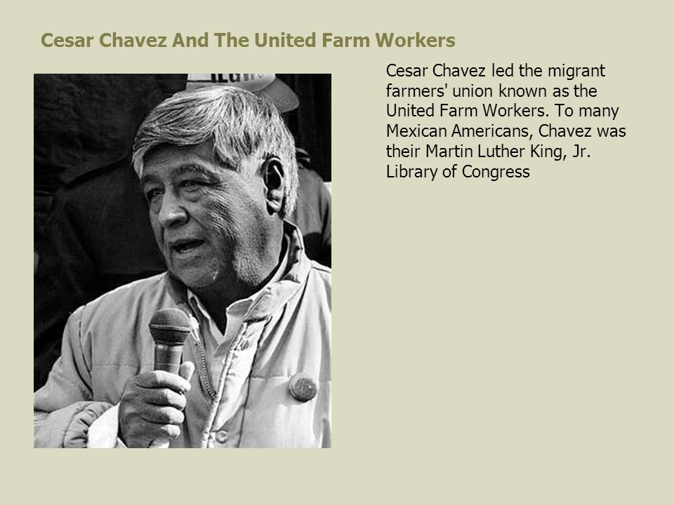 Cesar Chavez And The United Farm Workers Cesar Chavez led the migrant farmers union known as the United Farm Workers.
