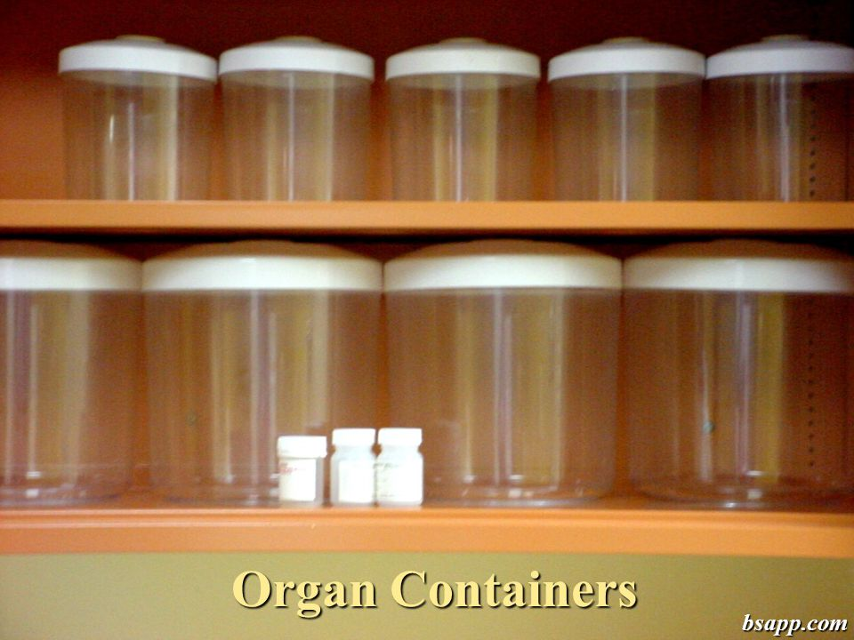 Organ Containers bsapp.com