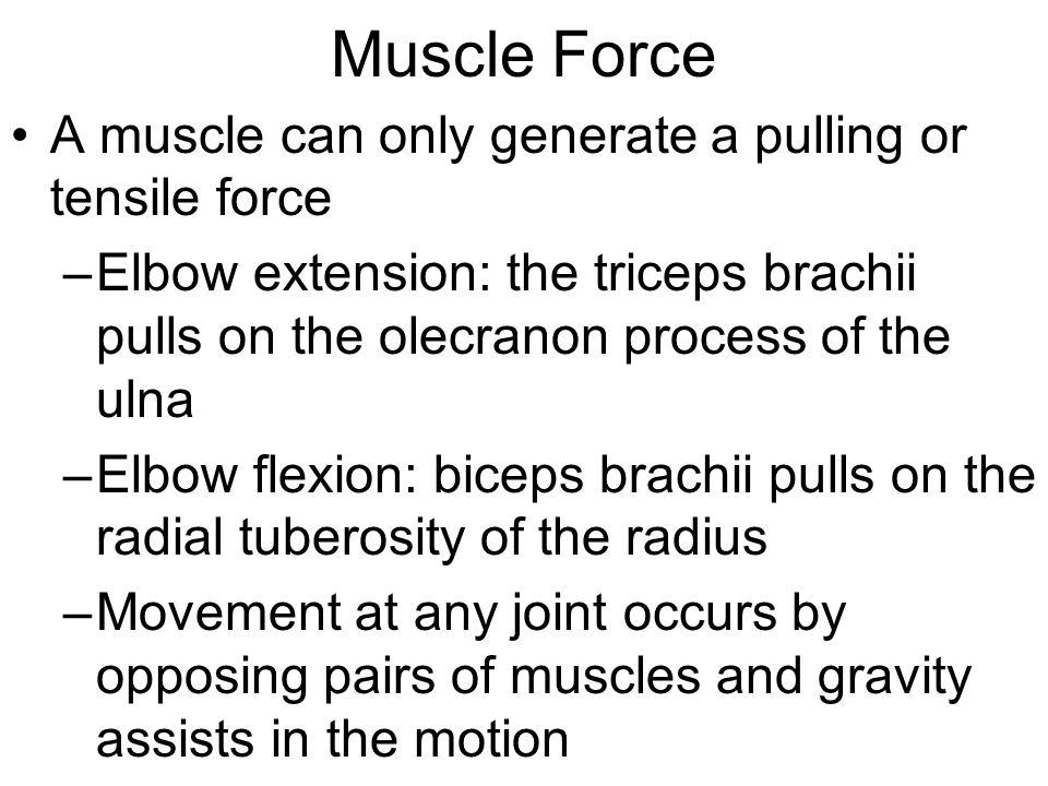 Muscle Force A muscle can only generate a pulling or tensile force –Elbow extension: the triceps brachii pulls on the olecranon process of the ulna –Elbow flexion: biceps brachii pulls on the radial tuberosity of the radius –Movement at any joint occurs by opposing pairs of muscles and gravity assists in the motion