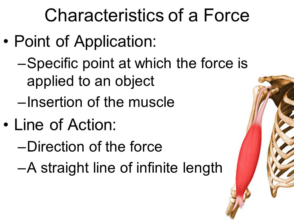 Characteristics of a Force Point of Application: –Specific point at which the force is applied to an object –Insertion of the muscle Line of Action: –Direction of the force –A straight line of infinite length