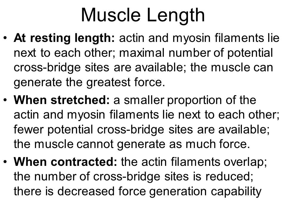 Muscle Length At resting length: actin and myosin filaments lie next to each other; maximal number of potential cross-bridge sites are available; the muscle can generate the greatest force.