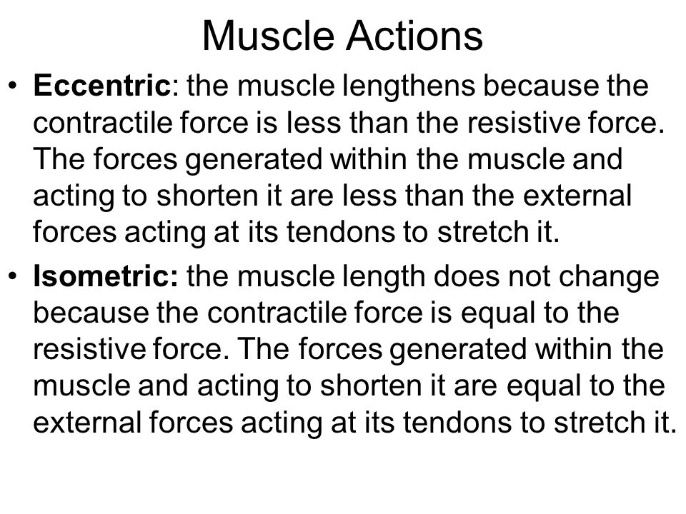 Muscle Actions Eccentric: the muscle lengthens because the contractile force is less than the resistive force.