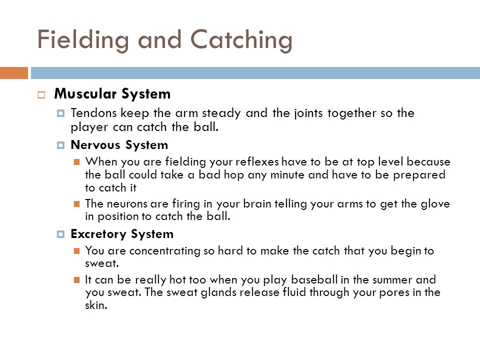 Pitching  Muscular System  Voluntary muscles contract in the arm- the biceps and triceps and forearm muscles  Tendons and fascia keep the arm straight to throw strikes  Lower body muscles like the hamstrings help make the body move to pitch with speed.