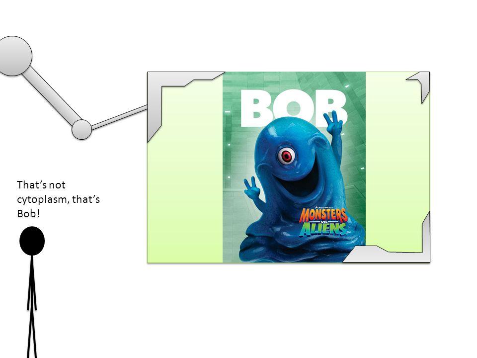 That's not cytoplasm, that's Bob!