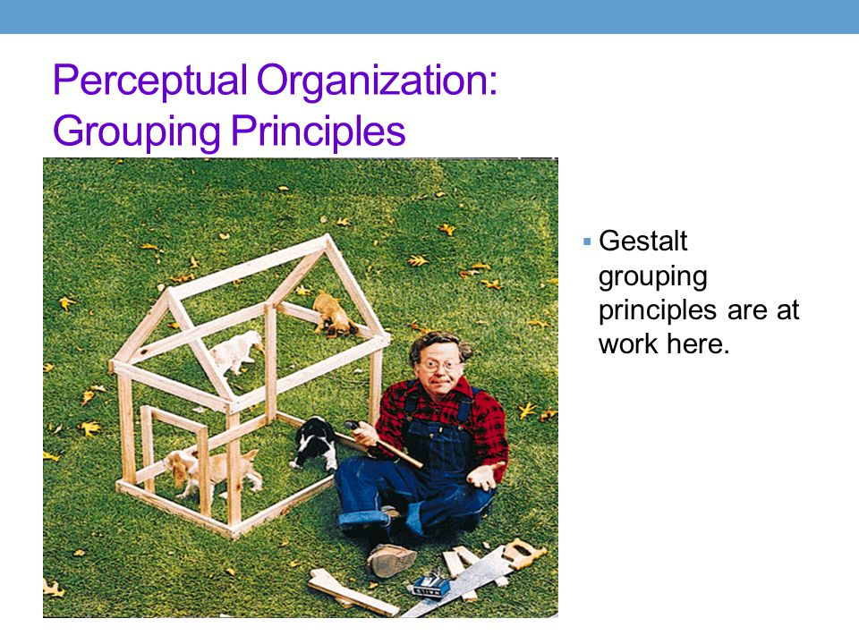 Perceptual Organization: Gestalt  Grouping  the perceptual tendency to organize stimuli into coherent groups  Grouping Principles  proximity--group nearby figures together  similarity--group figures that are similar  continuity--perceive continuous patterns  closure--fill in gaps  connectedness--spots, lines, and areas are seen as unit when connected